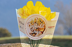 10 daffodils in a plastic sleeve with the Daffodil Days logo